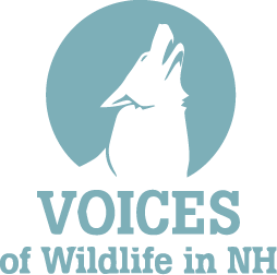 Voices of Wildlife in New Hampshire (VOW)